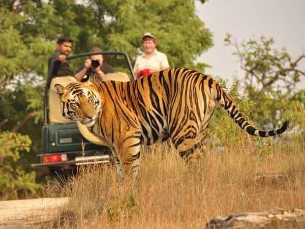Jungle Safari - 100 m from Anizham Junglestar