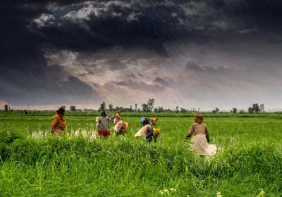 Agricultural & Farming