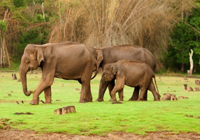 Nagarhole elephant safari