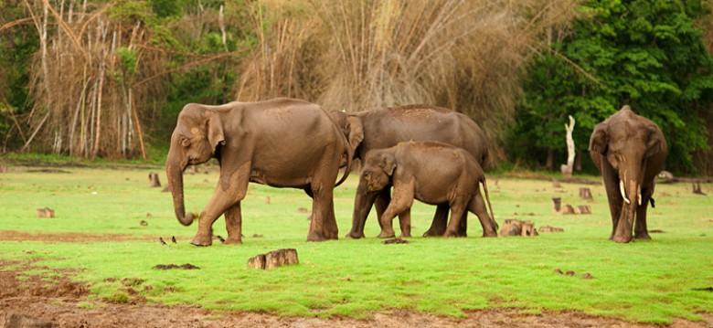 Nagarhole elephant safari